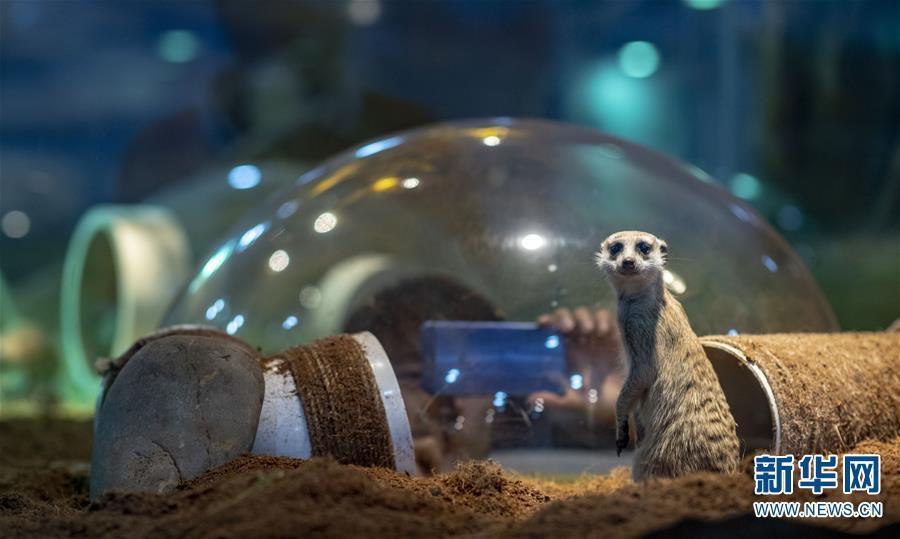 萌宠来袭!体验云南首家动物科普乐园