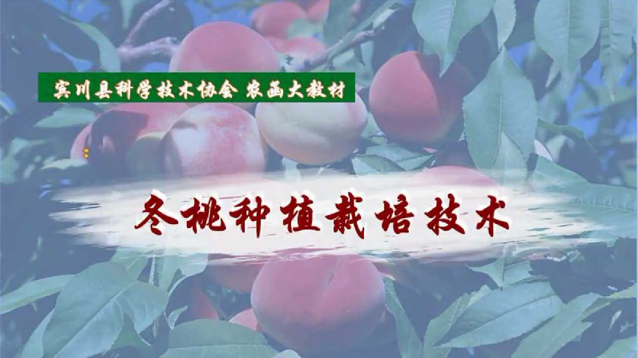 冬桃种植栽培技术