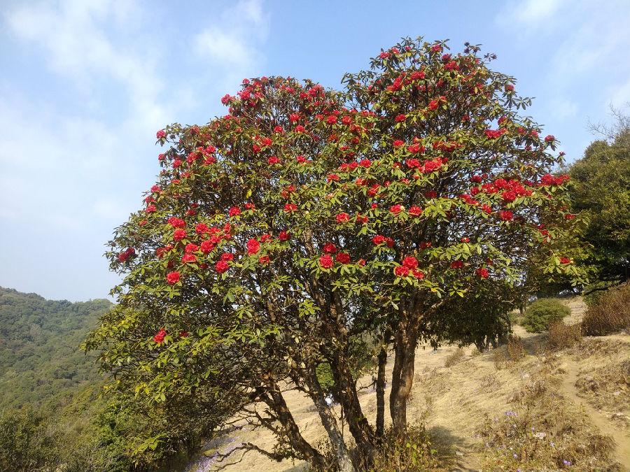 无论走到山间的哪个角落都能看到那一片片的映山红(又名杜鹃花)。那一抹红渲染每一片绿意之中,姹紫嫣红,让人看得满心欢喜,有它们的点缀,这一季的春不再寂寞。
