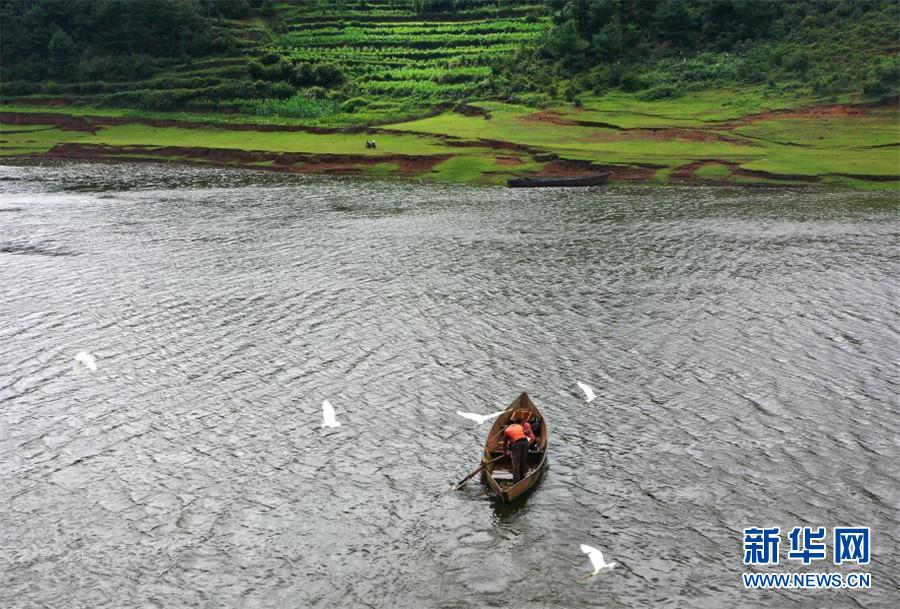 航拍镜头下的白鹭(6月20日摄)。新华网发(邓成斌 摄)