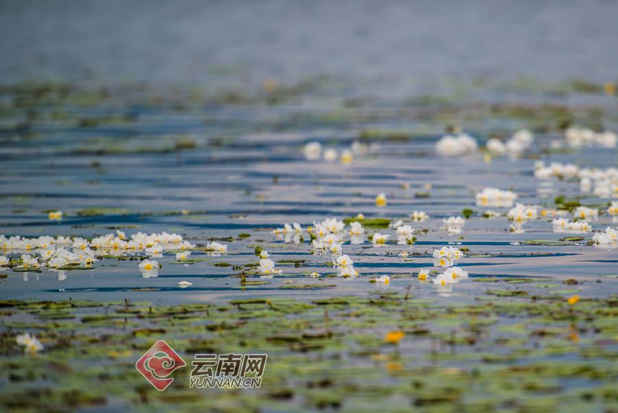 记者 张成 李星佺 刘畅 杨子双 摄影报道