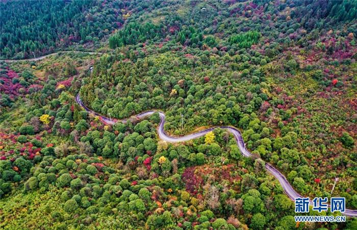 蜿蜒在森林中的山路。新华网发(左滨洪 摄)