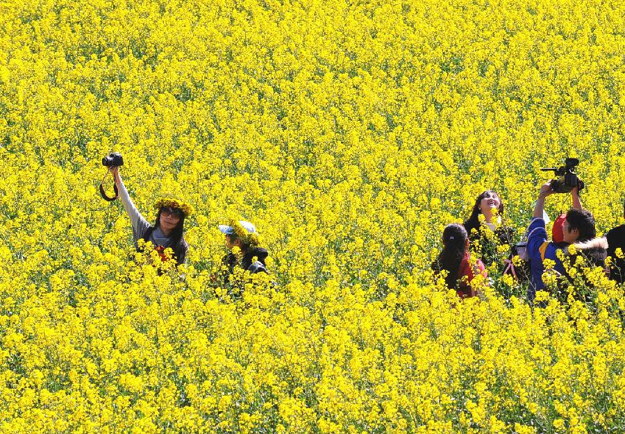 罗平人种油菜种出大风景,2002年罗平县经上海大世界基尼斯总部批准,创下基尼斯世界纪录,罗平油菜种植园成为世界最大自然天成花园。图为油菜花海。