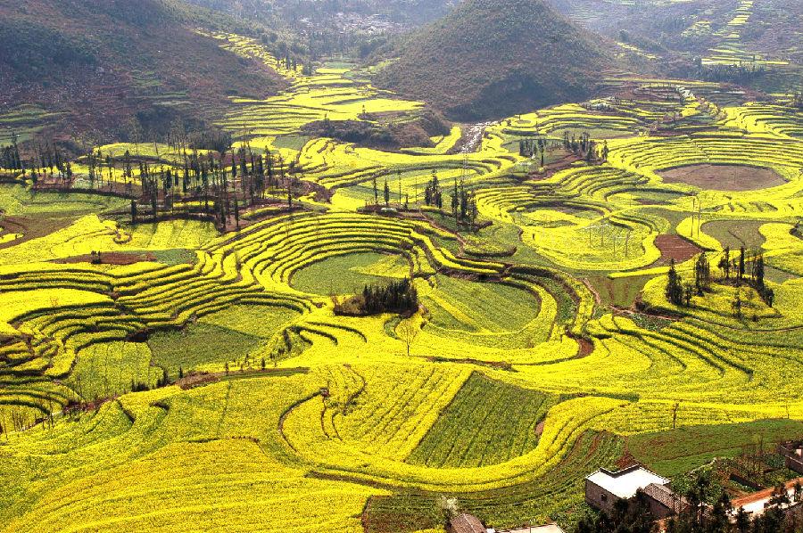 油菜产业催生赏花经济发展、带动农民增收致富、助推农业龙头企业跨越发展、为旅游服务业锦上添花,开启经济社会高质量跨越式发展快车道。图为油菜花海。